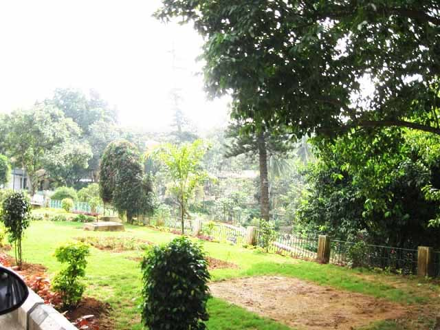 Tirumal forest