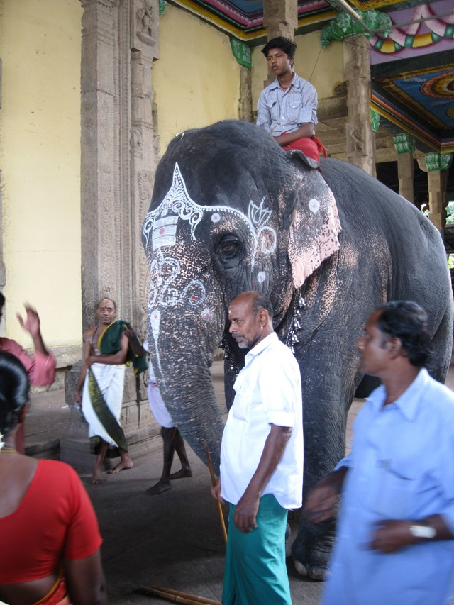 Elephant at the Meenakshi temple