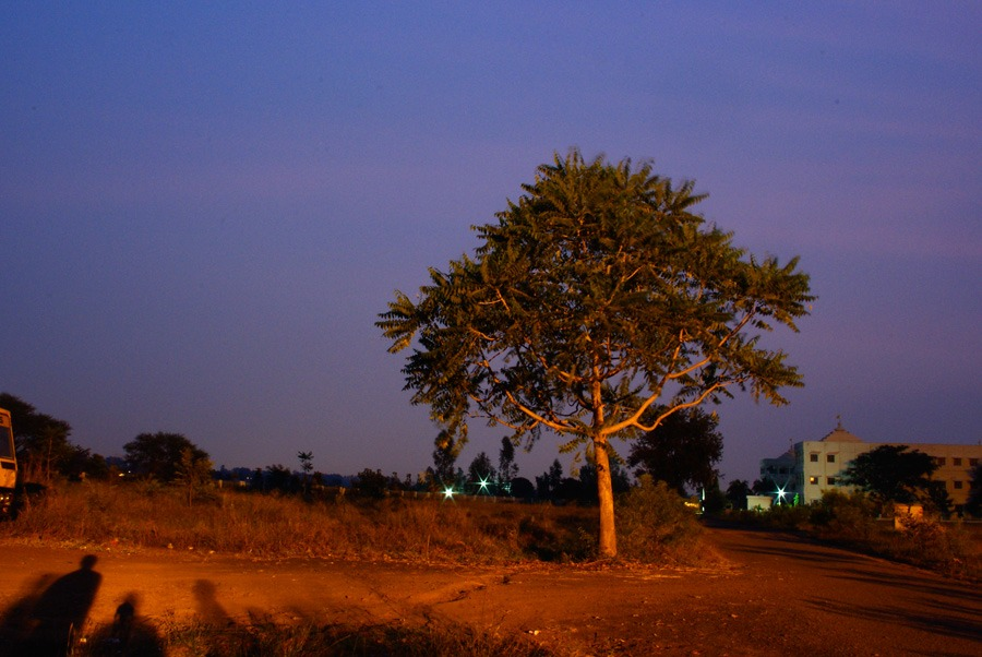 dusk-light-on-tree-bhopal-india